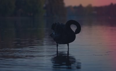 Not one but three black swans in 2019