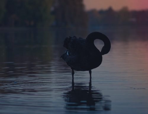 Not one, but three black swans in 2019…